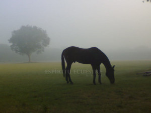 badal misty